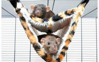 Гамак для крысы — делаем полезный аксессуар для питомца своими руками