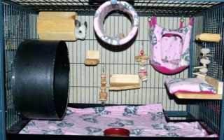 Самодельные игрушки и развлечения для декоративных крыс. Клетка для крысы, домик, игрушки своими руками