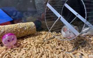 Наполнитель для крыс — виды наполнителей, их преимущества, особенности и недостатки