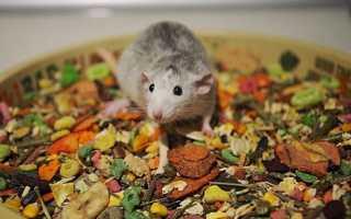 Как выбрать корм для крысы — обзор и рейтинг популярных брендов. Лучшие корма для крыс по отзывам пользователей