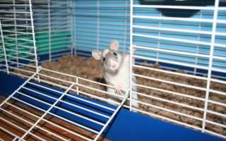 Клетка для крысы — как выбрать клетку для домашнего питомца, правильное обустройство жилья