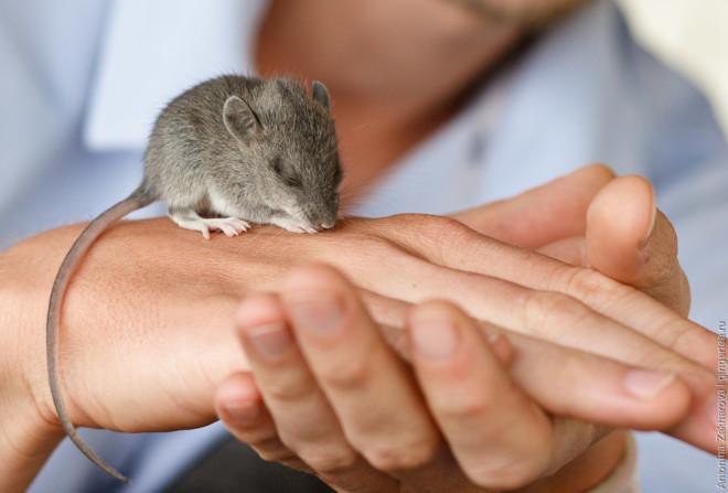 Мышка на руке